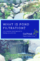 what is pond filtraion.png