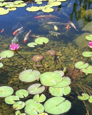 cool ponds koi pond