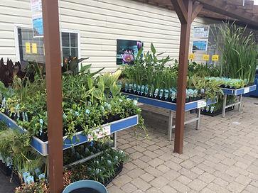 backyard pond help with plants