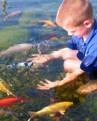 cool ponds staff