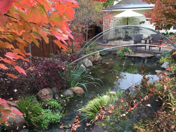 pond netting fall