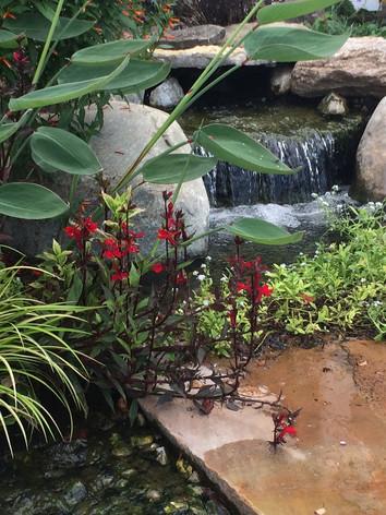 Thalia, Cardinal Flower, Water Forget-Me-Not, Dwarf Sweetflag