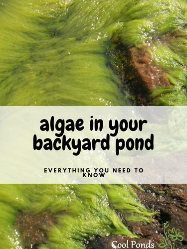 Algae in Your Backyard Pond