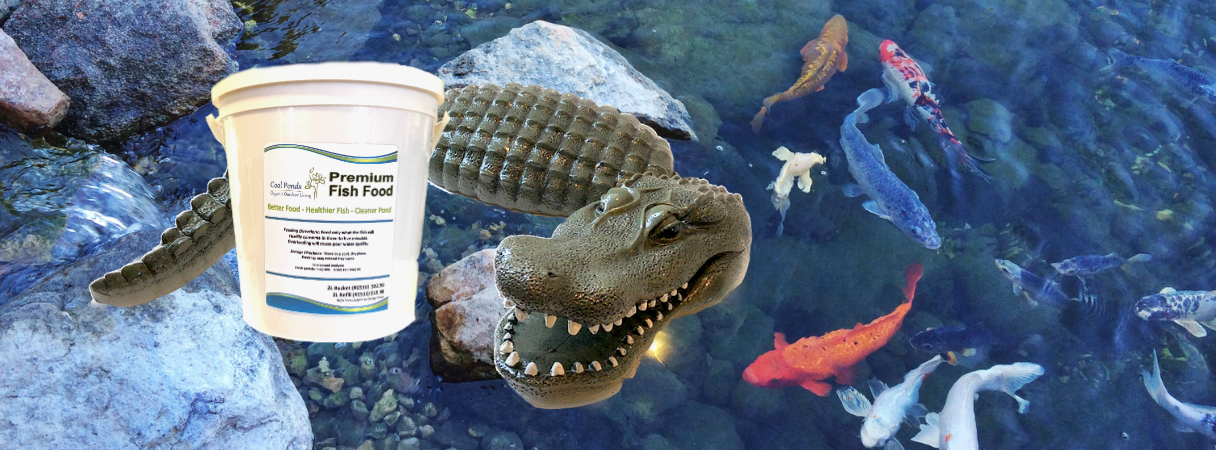 Pond Fish Supplies
