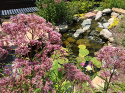 cool ponds display gardens