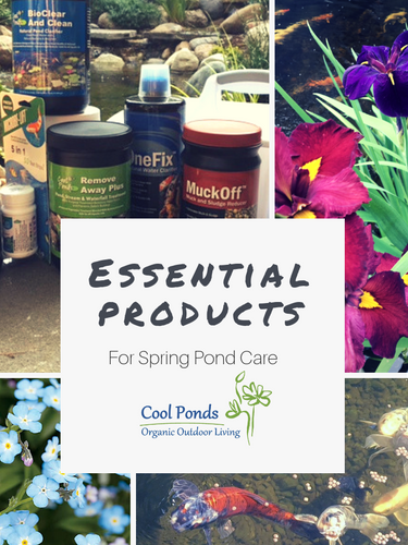 Essential Products for Spring Care