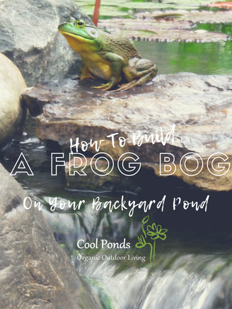 how to build a frog bog.png