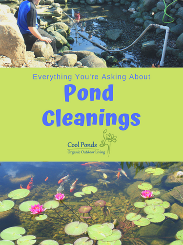 Pond Cleanings