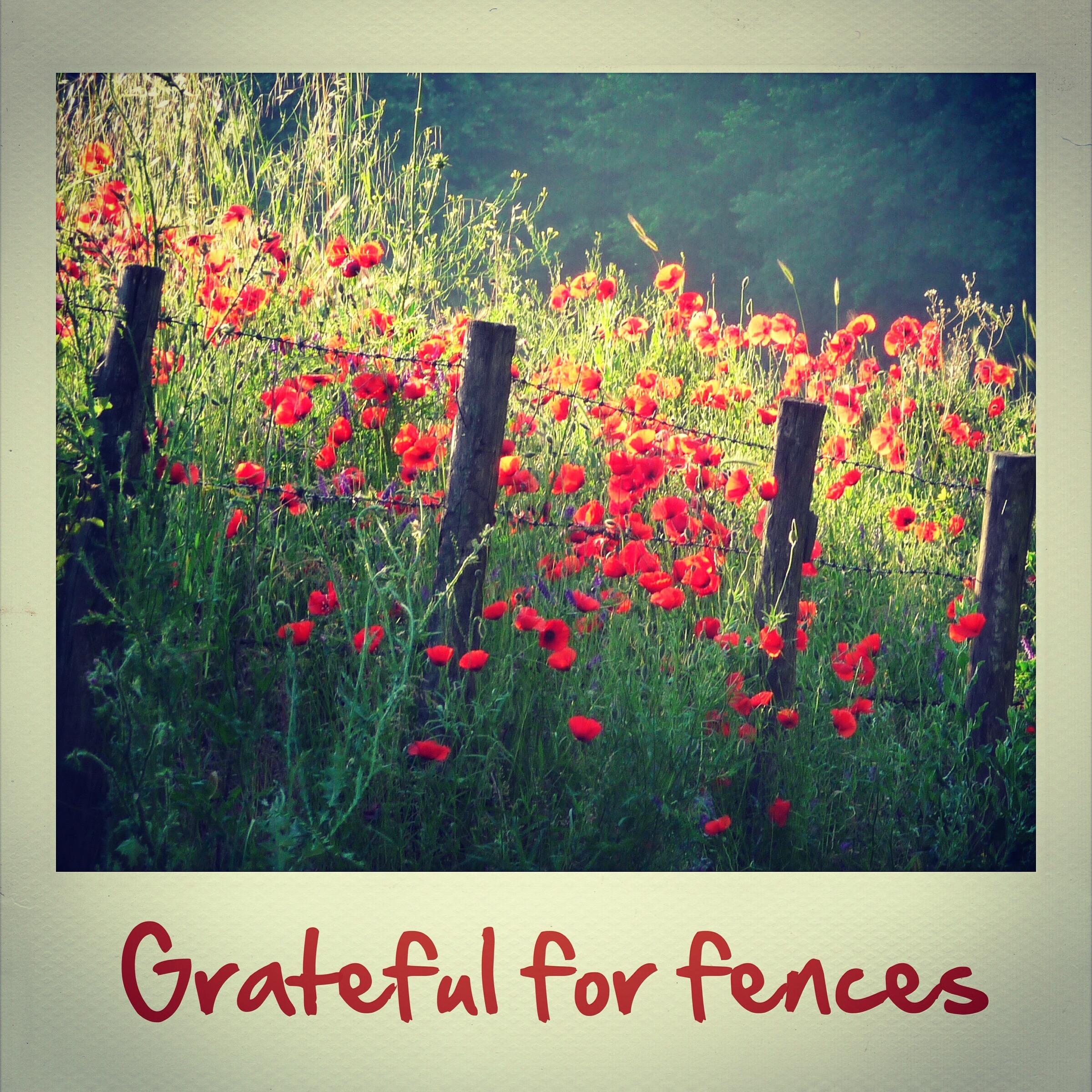Grateful for fences