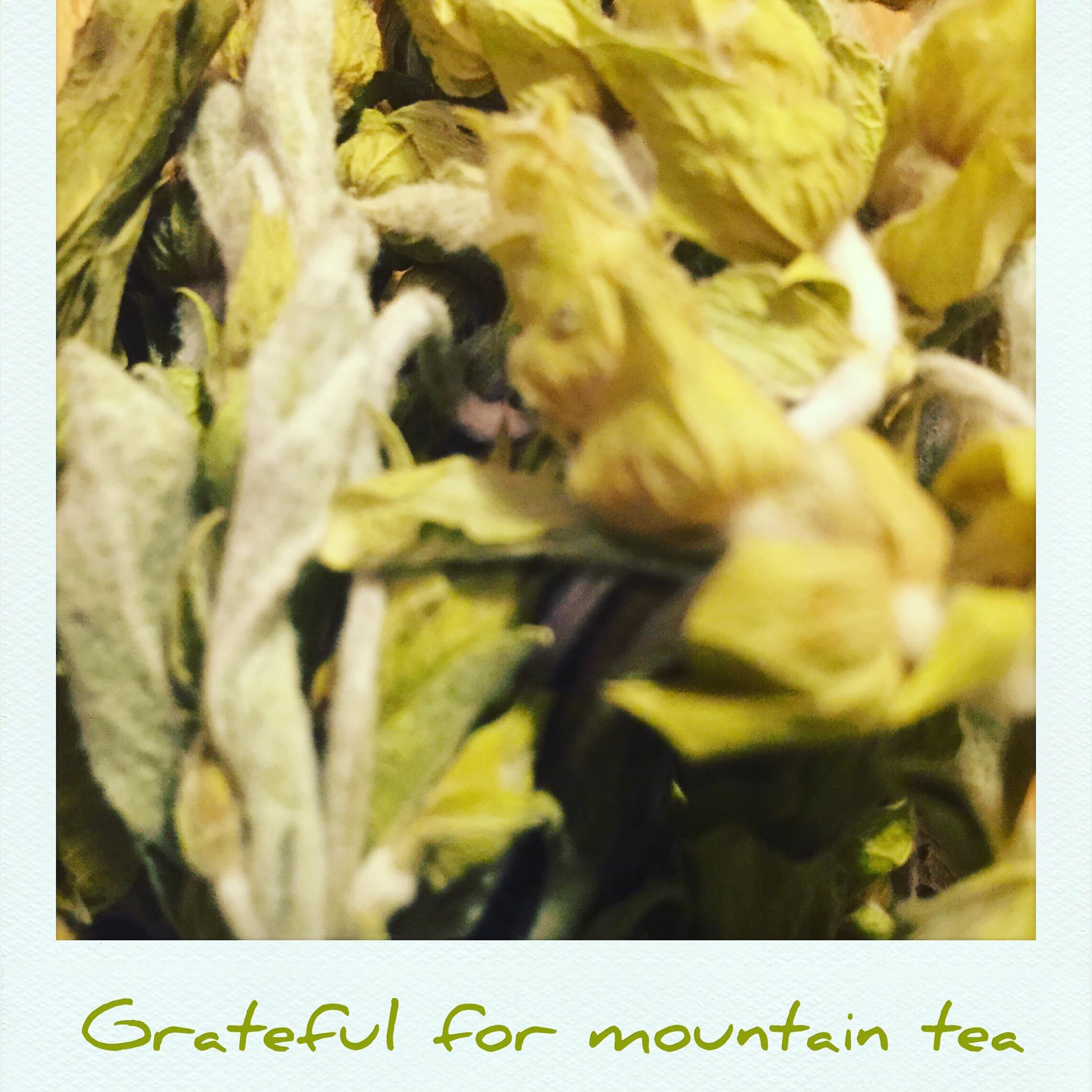 Grateful for Mountain Tea