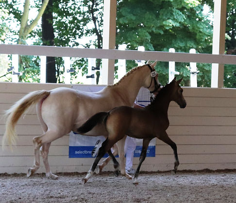 indoor trot r best.jpg