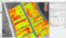 NDVI map.jpg