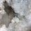 Thumbnail: Large White Quartz Geode with some Large Points
