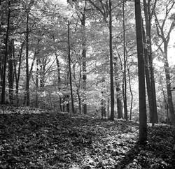 trees108