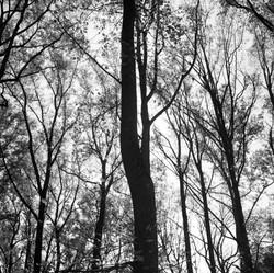 Trees088