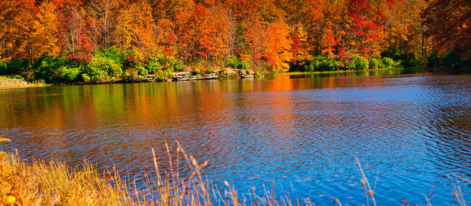 Fall : No Better Time to Start Preparing Your Pond for Next Spring!