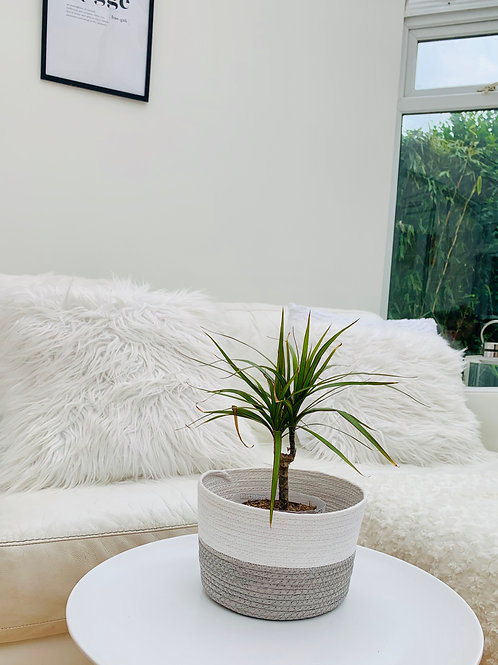 Medium woven planter