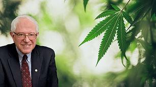 Bernie Sanders Weed Legalization