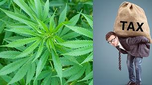 Cannabis IRS Tax Compliance 2021