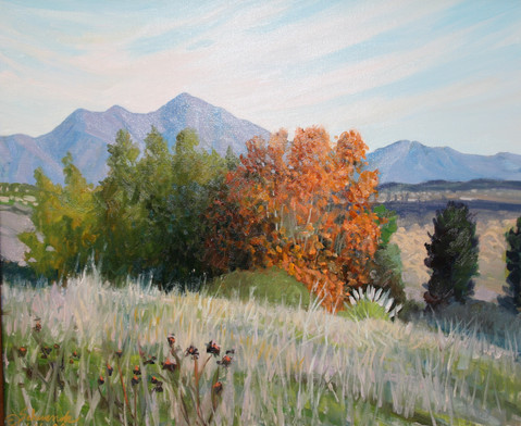 Morning Light Saddleback