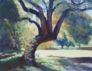 Casper's Oak