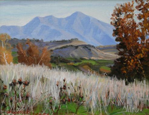 Dry Grass and Saddleback