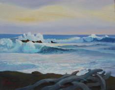Cambria Surf