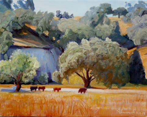 Fox Canyon Cattle
