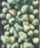cosecha de pera