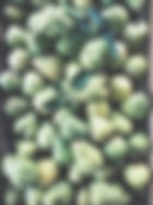 Birnen-Ernte