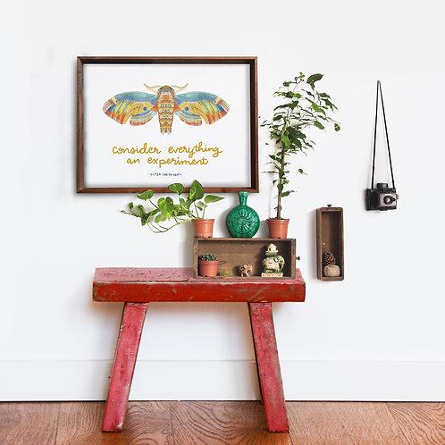 Corita Moth