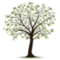 dd38eb8641ca673862dfff2bb8849bfc--tree-c