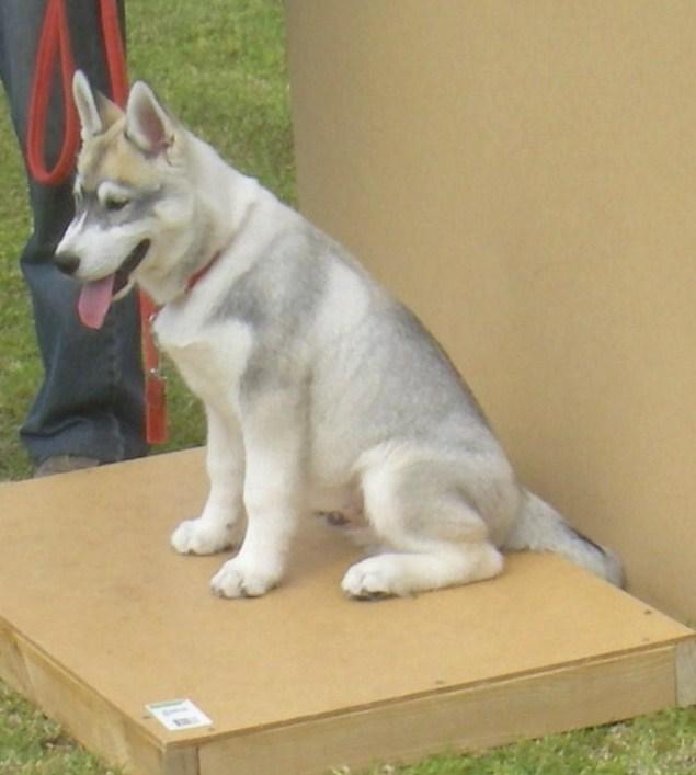 dog training 1809 152.JPG