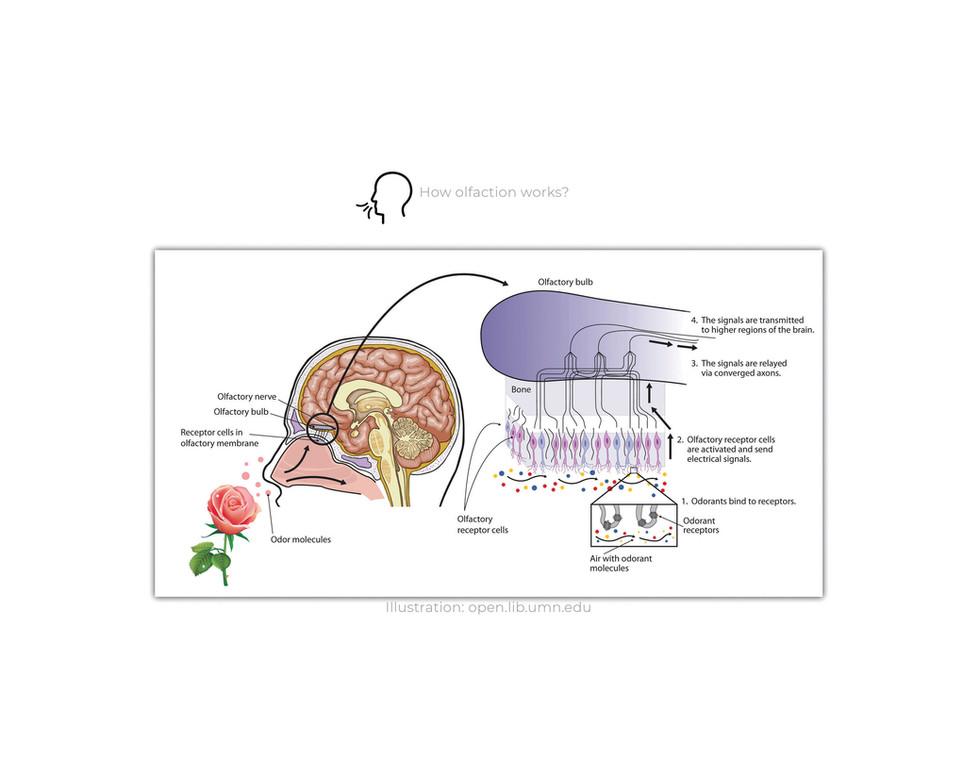 Information Olfactation4