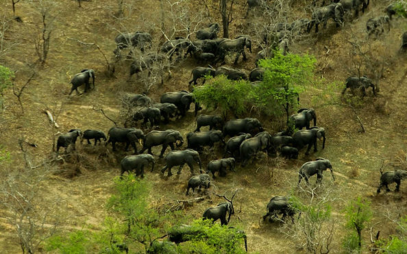 elephants, aircraft, anti-poaching, wings for conservation, aerial support, africa