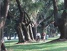 Bikers under Oaks.jpg
