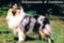 Collies von Crottorf - History