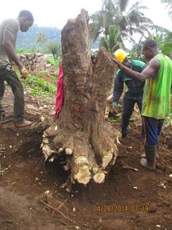 Removing a Stump