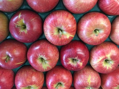 今秋のフルーツ