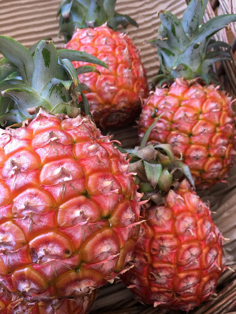 西表島アララガマ農園のパイナップル