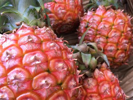 西表島アララガマ農園の完熟パイナップル
