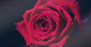 I Feel Love - Official Release...