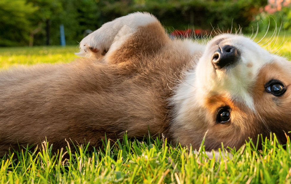 Puppy-Main-Image3.jpg