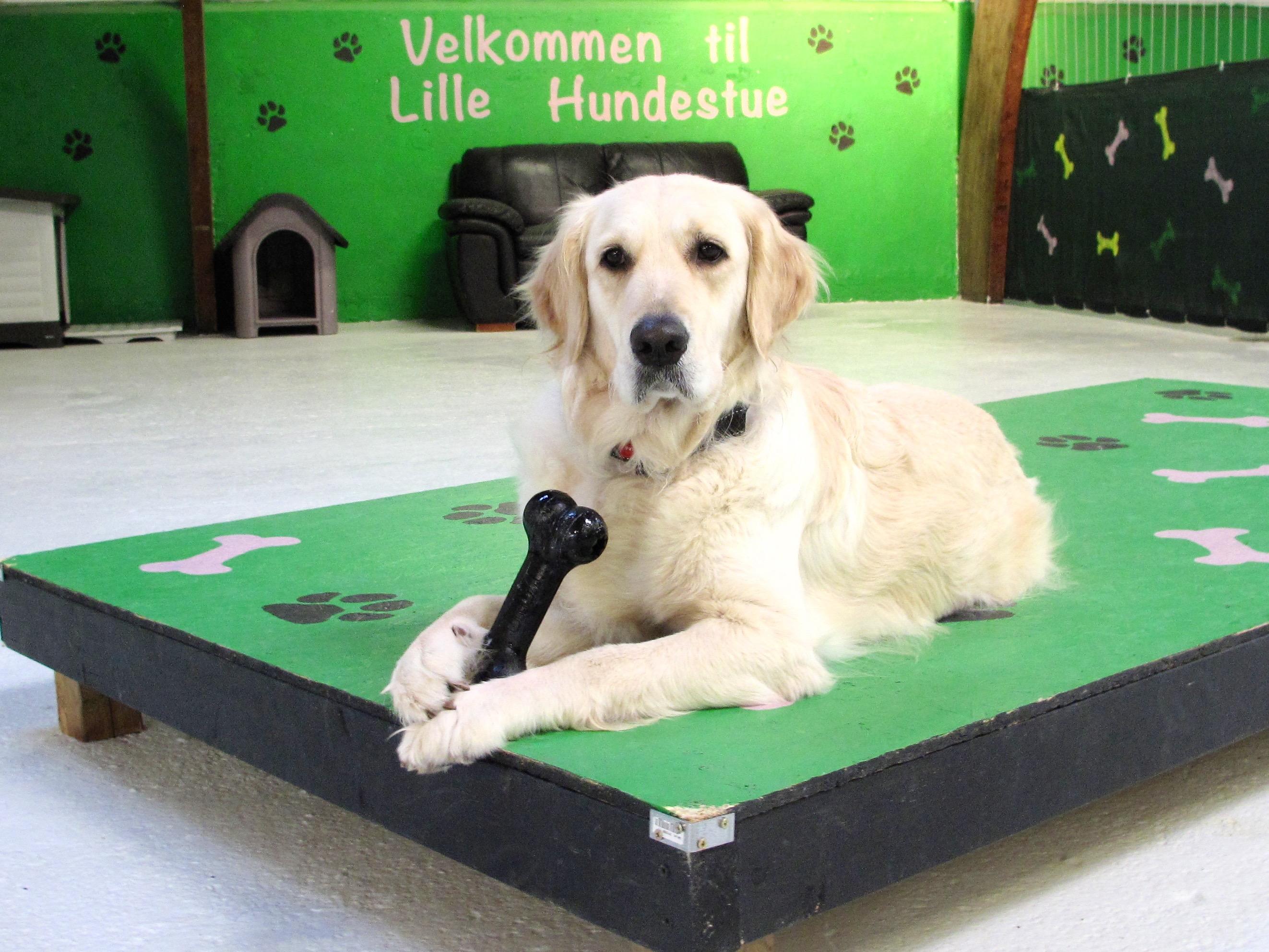 Hundehaven Potefryd - Kontakt.