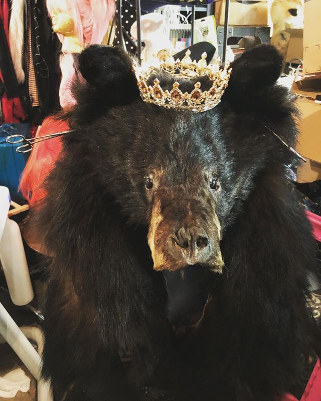 Hail to the king,baby! #taxidermy #etsy.