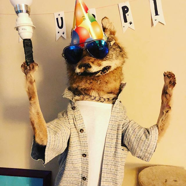 It's party time!! PARTYDOG! #taxidermy #