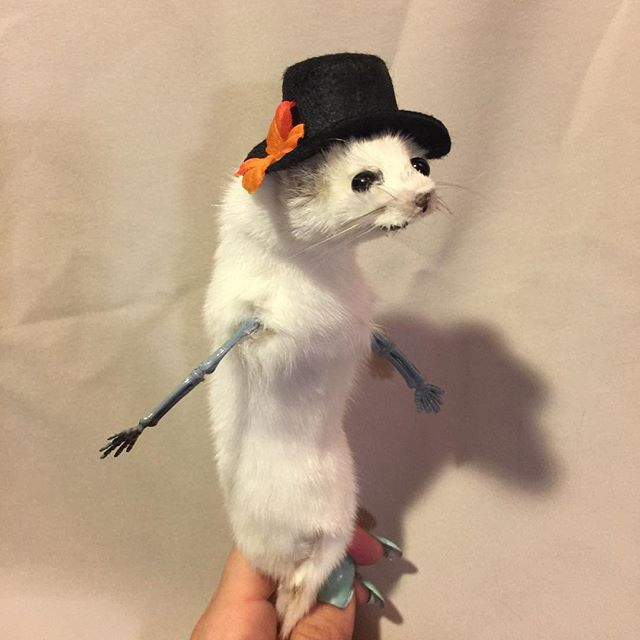 Handheld ermine with jaunty hat! #taxide