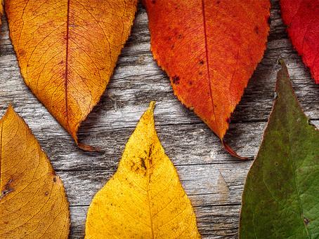 Fall Newsletter
