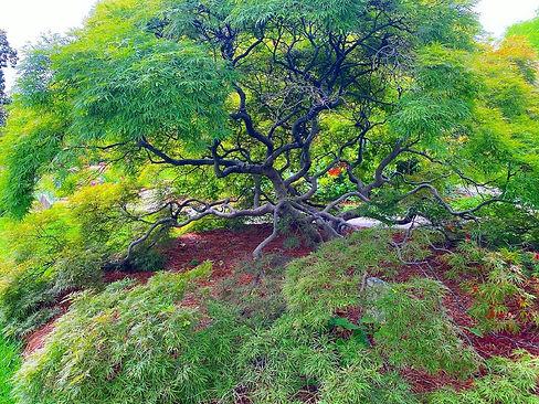 Kai tree.jpg