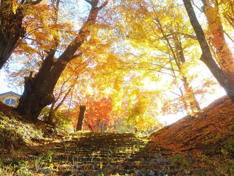 城址公園の秋祭り!